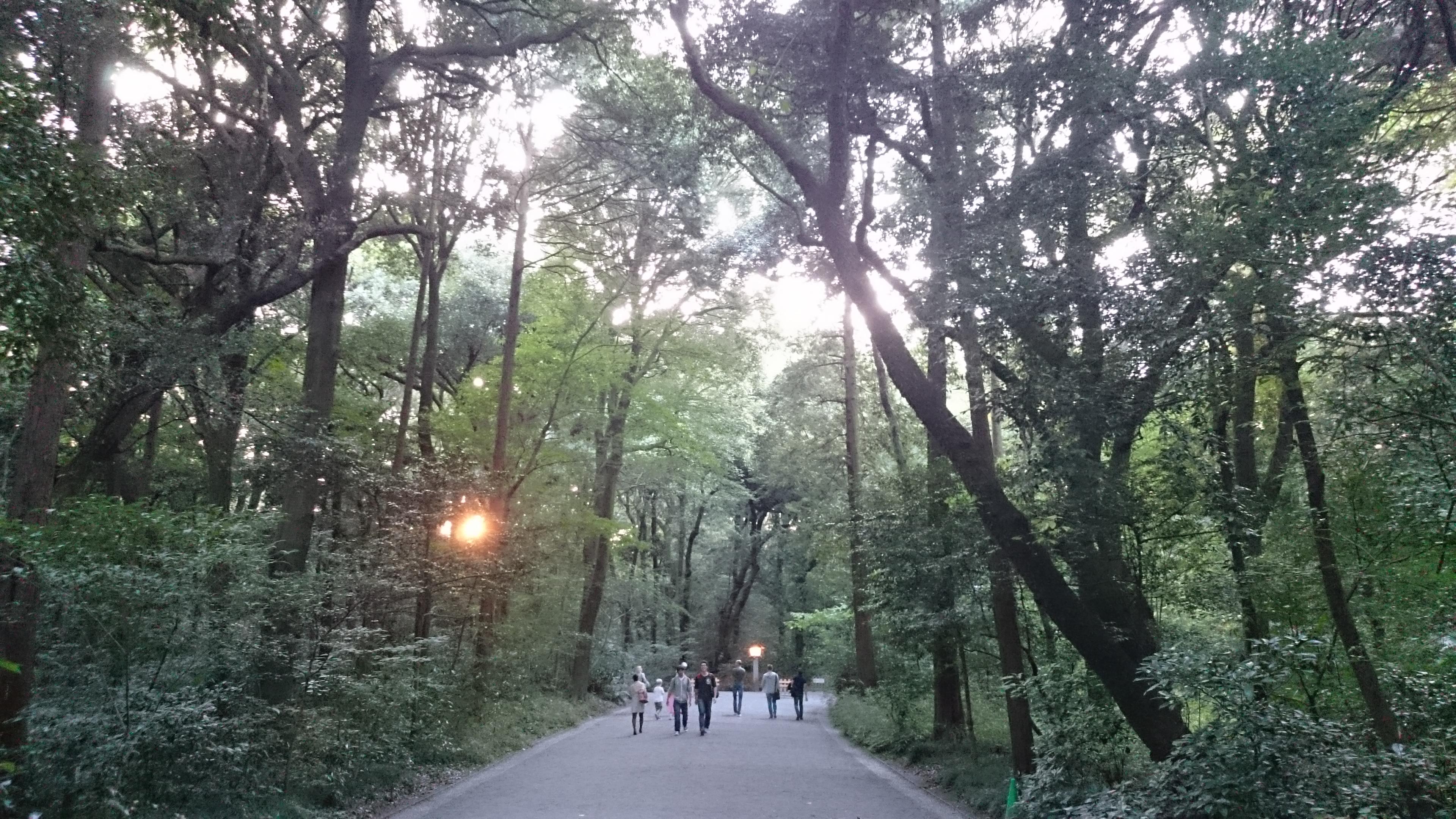 parc sanctuaire meiji-jingu, Tokyo, Japon